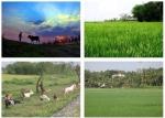 Video học tiếng anh - Bài nghe tiếng Anh lớp 10 Unit 8: The Story Of My Village