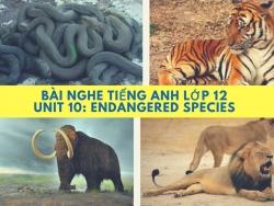 Bài nghe tiếng Anh lớp 12 Unit 10: Endangered Species