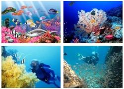 Video học tiếng anh - Bài nghe tiếng Anh lớp 10 Unit 9: Undersea World