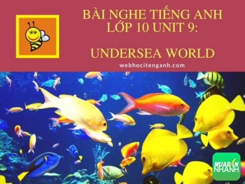 Bài nghe tiếng Anh lớp 10 Unit 9: Undersea World